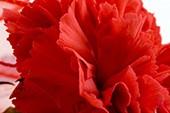 The Rose - Slow Waltz - Hochzeits Version - Brenda Swain & Patrick Yarbrough