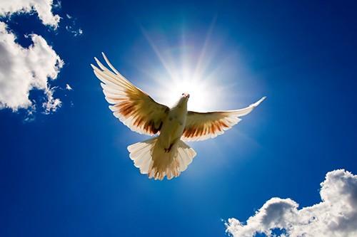 Frieden Fängt im Herzen an - Gaby Albrecht