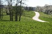 Rennsteiglied - Wildecker Herzbuben