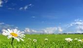 Petite fleur - Sidney de Bichet