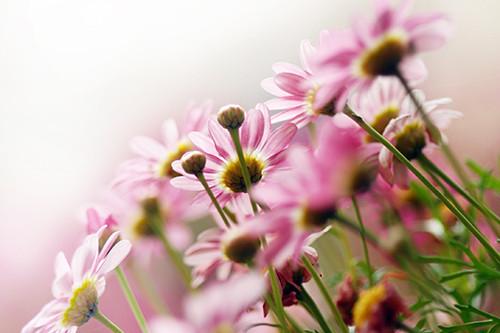 Sag mir wo die Blumen sind (neuer Mix) - Katja Ebstein