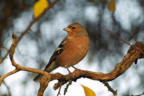 Wo kleiner Vogel ist dein Nest - Karel Gott