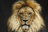 Lion King - Elton John