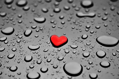 Ein Herz kann verzeih'n - Tommy Steib