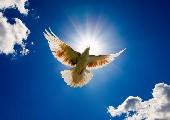 Frei wie ein Vogel im Wind - Klostertaler