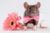 Die schnellste Maus von Mexico - Speedy Gonzales