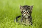 Alley cat - Bjorn
