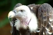 Spirit Of The Hawk - Rednex