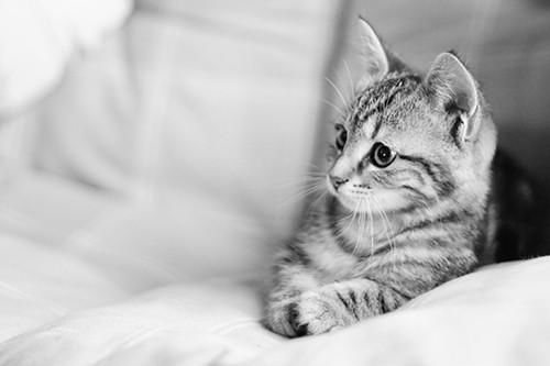 Nachts sind alle Katzen grau - neustes Werk - Kerstin Ott