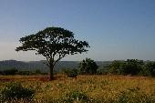 Africa - Rose Laurens
