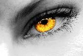Schau mir in die Augen - Die Kolibris