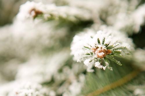 Lament for a frozen flower - Secret Garden