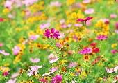 Flower Power Schmuse Medley - Diverse Interpreten