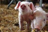 So ein Schwein ... - Wolfgang Petry
