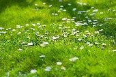 Strohblumen - Tom Astor