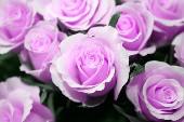 Weiße Rosen aus Athen - Nana Mouskouri