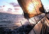 Auf dem Boot der tausend Träume - Calimeros