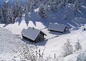 Alpenrose - Polo Hofer