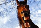Es hängt ein Pferdehalfter an der Wand - Ralf Paulsen
