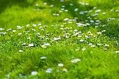Und wieder blühn die Alpenrosen - Kastelruther Spatzen