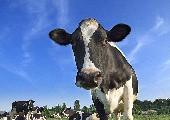Die bunte Kuh - Markus Becker