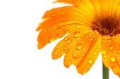 Orange Blossom Special - Charlie Daniels Band