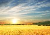 Lass die Sonne wieder scheinen - Ronny