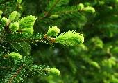 Im grünen Wald dort wo die Drossel singt - Heino